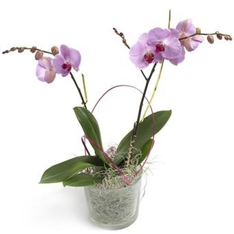 violette Schönheit