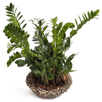 Pflanzen-verschicken