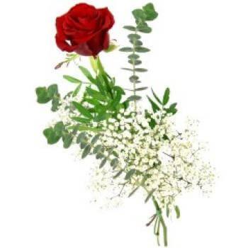 Einzelne Rose rot
