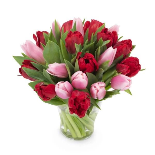 Tulpenstrauß in rot und pink