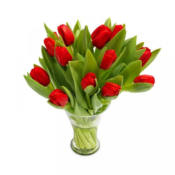 Leuchten rote Tulpen